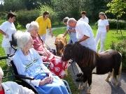 Besuch der Minipferde in der Seniorenpension in Lockenhaus